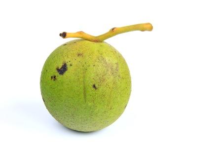 Black walnut (Juglans nigra) isolated in front of white background Stock Photo
