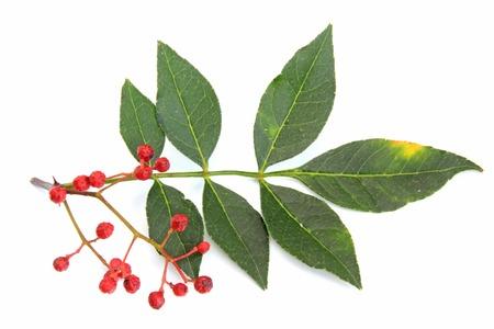 Szechuan pepper (Zanthoxylum piperitum), fruits isolated against white background Reklamní fotografie