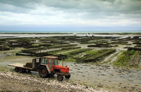 english channel: Oyster farming at Cancale in the bay of Mont-Saint-Michel, the English Channel, Ille-et-Vilaine, Brittany, France, at low tide