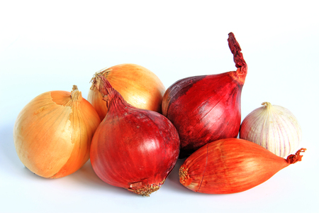 Various types of onions: onion, red onion, shallot and garlic - isolated against white background
