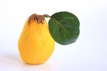 membrillo: Fruta madura membrillo aislado contra el fondo blanco Cydonia oblonga Foto de archivo