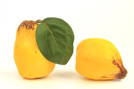 quince: Ripe quince fruit isolated against white background Cydonia oblonga