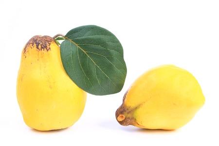membrillo: Membrillo maduro Cydonia oblonga frutos Foto de archivo