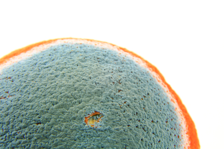 Mold on an orange, isolated against white background Stock Photo