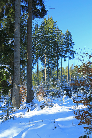 snowy winter forest in the Ore Mountains, Saxony, Germany Imagens