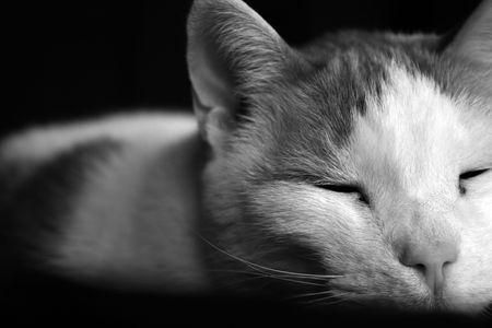Sleeping Cat, Asleep