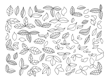 crocket: Leaves foliage hand drawn sketches. Vector set design elements on a white background.