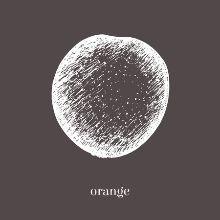 scratchy: Orange hand drawn sketch. Isolated vector food illustration. Vintage style. Illustration
