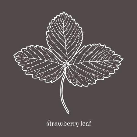 Aardbeienblad geïsoleerde schetsmatige stijl. Hand getekende doodle illustratie.