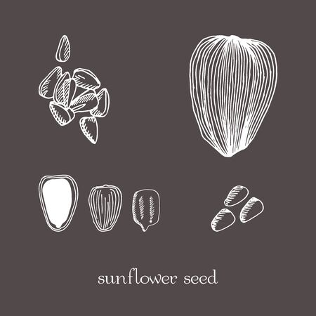 Set sunflower seeds isolated. sketch hand drawn illustration isolated. Doodle style.
