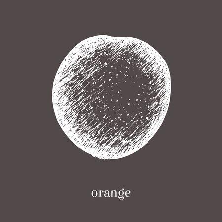 Orange hand drawn sketch. Isolated food illustration. Vintage style. Foto de archivo