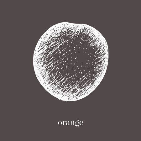 scratchy: Orange hand drawn sketch. Isolated food illustration. Vintage style. Stock Photo