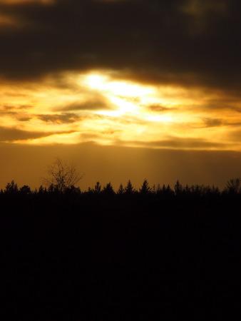sunshines:  sun shines