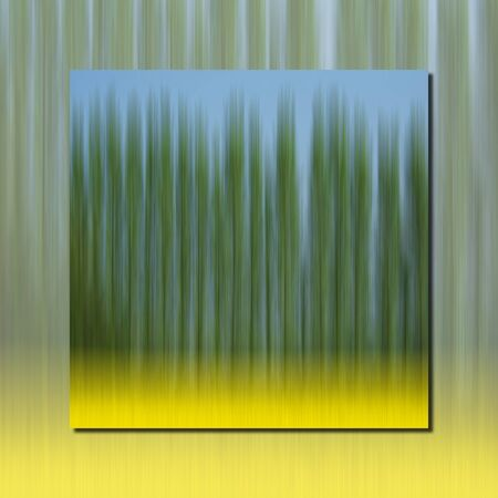 oilseed: abstract oilseed field