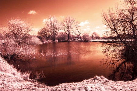 Infrared landscape photo of trees a lake and trees in red   orange Stock Photo