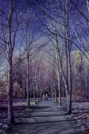 trees photography: infrared park with trees photography