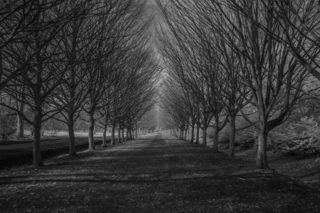 trees photography: Infrared trees in winter photography