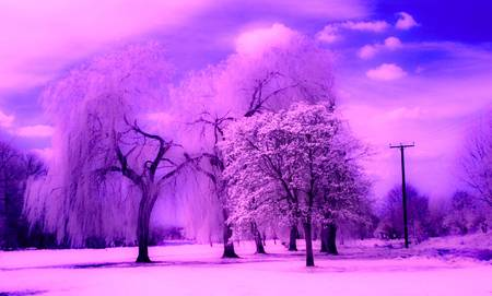 trees photography: Infrared photography of the park and trees in St Neots, Cambridgeshire  UK