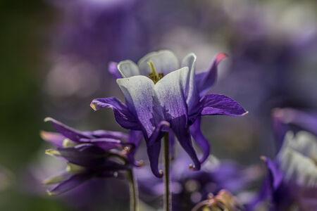 violette fleur: Macro Photo d'une fleur pourpre - Nature Photographie Banque d'images