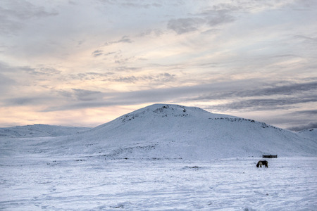 Photo of a horse at Reykjanes Peninsula, Iceland. The landscape is covered in snow. Photo taken in Iceland