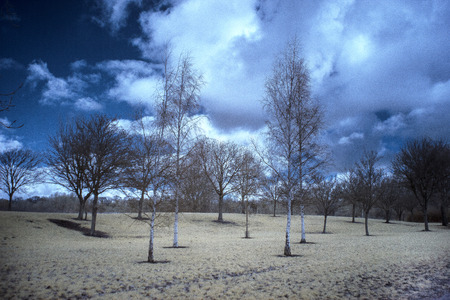 Photo of trees in a park taken with an infrared camera. Stock Photo