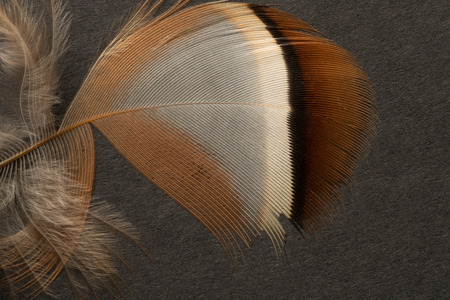 Brown and cream spotted, striped, patched textured feather close up.