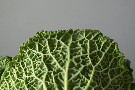 savoy: A close up of a savoy cabbage leaf