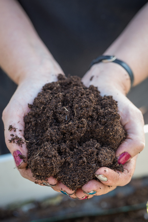 nourish: Close-up of a womans hands with painted nails cupping a mound of gardening compost.