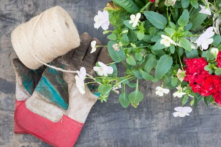 gardening gloves: Light brown string, dirty gardening gloves, and bowl of pansies and red flowers on a muddy textured background. Stock Photo