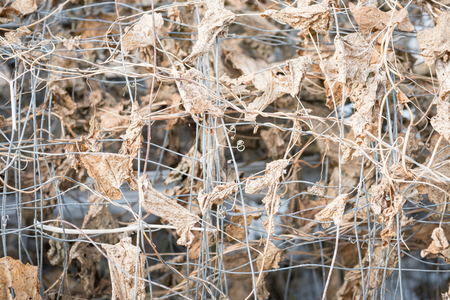 twining: Still Life Photo of Dried Leaves Twining Round Wire Gardening Mesh shot from straight on Stock Photo