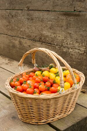 A large wooden basket sits on wooden planks, filled with different sized brightly coloured organic tomatoes. Orange, red, yellow and green baby tomatoes sit alongside larger produce. Stock Photo