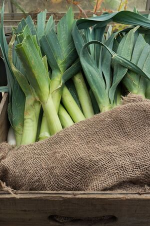 A brown wooden crate holds a hessian sack and several large green organic leeks with long leaves Stock Photo