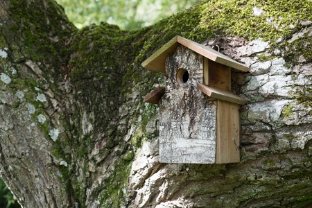 brak: a man made wooden bird house covered in brak sits on a huge tree branch, covered in thick green moss