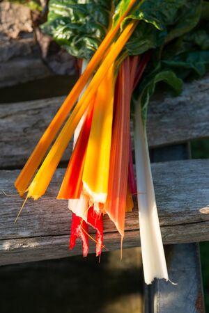 Orange, red, and white swiss chard stems Stock Photo