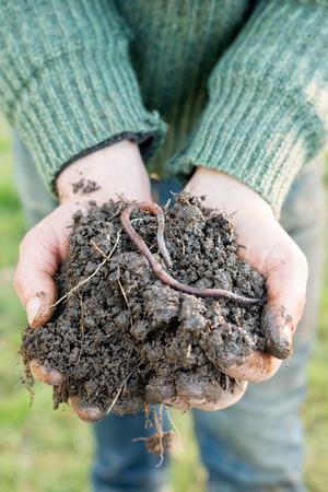 Un ver de terre sur un tas de compost sur une paire sur les mains en coupe Banque d'images - 73862235