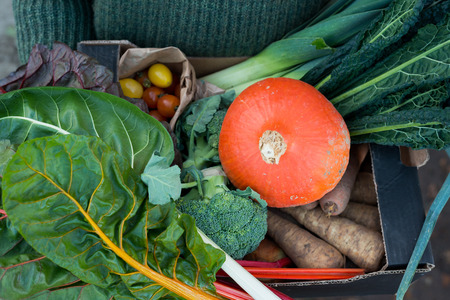 A variety of freshly-picked vegetables including, swiss chard, squash, parsnips, cherry tomatoes, kale, leeks, and broccoli in a cardboard box.