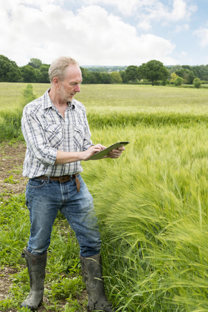 Farmer in a wheat field tapping on a tablet computer screen Stock Photo