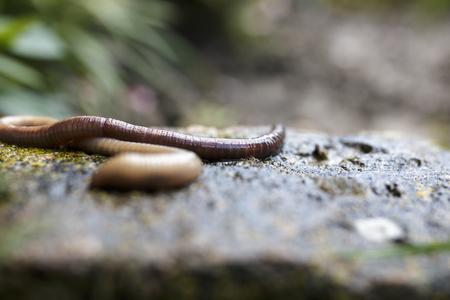 Earthworm crawling on stone block close up