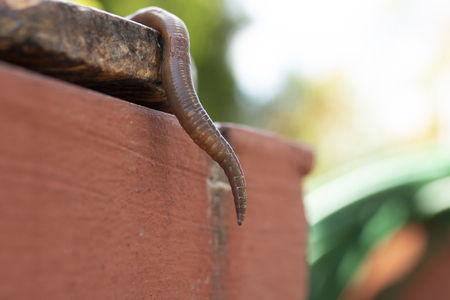 Macro shot of an earth worm dangling from a platform Stock Photo
