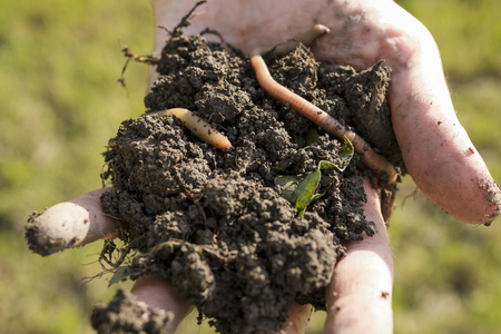 Close up of hand with a heap of soil with earthworm