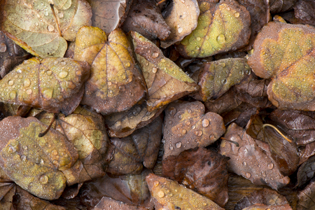 Decomposing leaves with dewdrops for backgrounds Imagens