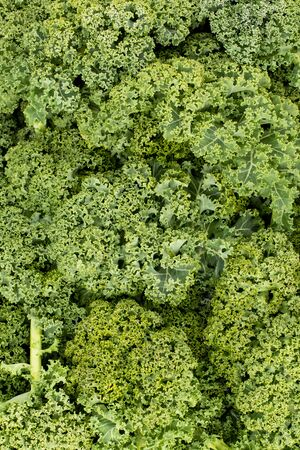 Overhead view of a heap of green curly kale leaves in portrait orientation