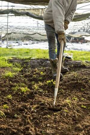 Person tilling soil with a hoe in a plant nursery 免版税图像