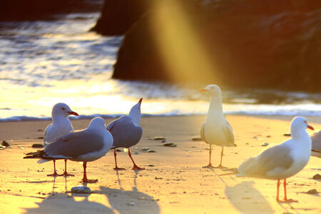 the chosen one: The Chosen One. A sea bird is illuminated by a random glare from the morning sun, making it appear as if a \\\\\\\\\\\\\\\\\\\\\\\\\\\\\\\holy\\\\\\\\\\\\\\\\\\\\\\\\\\\\\\\ light shines up