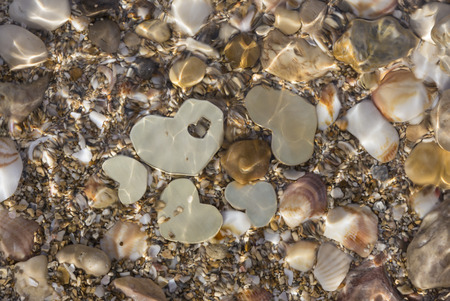 shallow: Five small metallic heart shapes are placed in shallow water with seashells and sand. The water ripples.