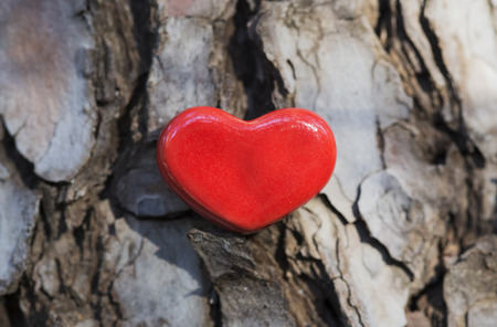 tree bark: A red ceramic heart is placed on a tree bark