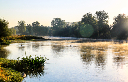 early morning: Early morning river scene with mist and trees. Stock Photo