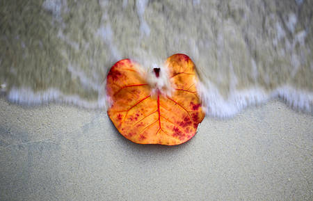 swept: Orange leaf is swept by an incoming wave on a sandy shore.