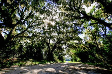 Road with trees overhanging with spanish moss in Southern USA. Reklamní fotografie