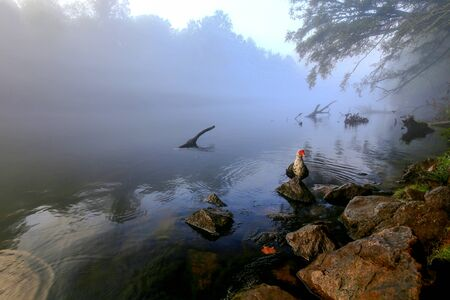 Misty morning river bank with a wild goose.